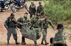 Colombia: FARC đình chỉ lệnh ngừng bắn sau khi bị tấn công