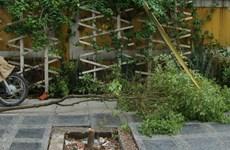 Thái Bình: Ngang nhiên chặt cây quý trên đường Trần Hưng Đạo