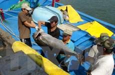 Khánh Hòa: Hạ thủy tàu đánh bắt xa bờ đầu tiên theo Nghị định 67