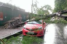 Hà Nội: Hàng trăm cây gãy đổ, ít nhất 5 người thương vong