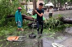 Trận dông lốc lịch sử khiến 1 người chết, 120 cây gãy đổ