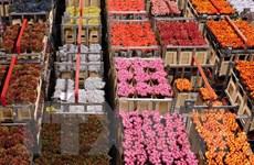 Nga cấm nhập khẩu hoa từ Hà Lan do vi sinh vật gây hại