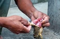 Đắk Lắk: Một cháu bé tử vong vì ngộ độc khi ăn trứng cóc