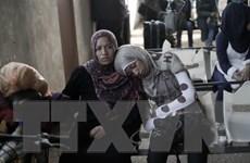 Ai Cập: Bắt hơn 1.300 phương tiện vận chuyển vũ khí qua biên giới