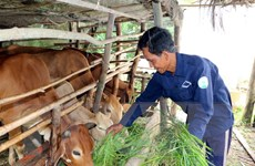 Ngành chăn nuôi Việt Nam với TPP: Vẫn có lộ trình để chuẩn bị