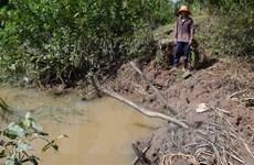 Sóc Trăng: Vỡ tràn 30 đoạn đê bao ở Cù Lao Dung do triều cường