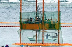 Chính phủ Nhật kiện chính quyền tỉnh Okinawa liên quan vụ Futenma