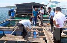 Nhiều lợi thế phát triển kinh tế biển ở Đồng bằng sông Cửu Long
