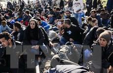 Cuộc khủng hoảng người tị nạn có nguy cơ làm tan rã châu Âu