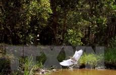 Khu bảo tồn Láng Sen trở thành khu Ramsar thứ 7 của Việt Nam