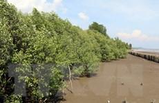 Gần 10,8 triệu người hưởng lợi từ dự án trồng rừng ngập mặn