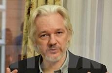 """Ecuador bác đề nghị thẩm vấn Julian Assange """"vì lý do nghi thức"""""""