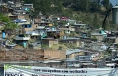 """Brazil sẽ tiến hành """"nội chiến"""" chống lại dịch bệnh do virus Zika"""