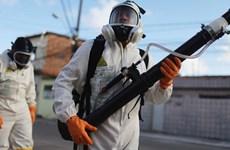 Thái Lan, Đức, Australia xuất hiện trường hợp nhiễm virus Zika