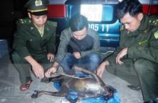 Quảng Bình: Khởi tố vụ vận chuyển trái phép cá thể voọc Hà Tĩnh