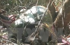 Tóm gọn 2 đối tượng bắn bò tót trong khu bảo tồn tại Đồng Nai