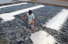 Phó Thủ tướng Vương Đình Huệ chỉ đạo mua tạm trữ muối niên vụ 2016