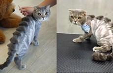 Dịch vụ cắt tỉa lông biến thú cưng thành các tác phẩm độc đáo