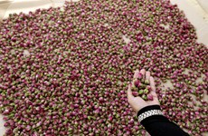 Thích thú ngắm nhìn những loài hoa được thu hoạch như hái quả