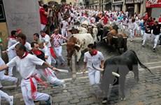 Tây Ban Nha: 14 người bị thương trong lễ hội rượt bò San Fermin