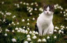 Mát mắt ngắm nhìn loài vật tạo dáng đáng yêu bên những bông hoa