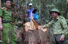 Điều tra vụ phá rừng nguyên sinh đặc biệt nghiêm trọng