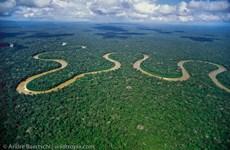 Cần 300 năm để hoàn thành thống kê thực vật rừng Amazon
