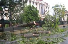 [Photo] Cây xanh đổ la liệt sau mưa lớn, gió mạnh tại Thái Bình