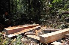 Cần phối hợp chặt chẽ giữa các lực lượng trong bảo vệ rừng