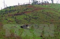 Cấp hộ khẩu khống - hành vi tiếp tay cho nạn phá rừng tại Mường Nhé