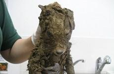 Sinh vật kỳ lạ phủ đầy bùn và sự thật bất ngờ sau khi tắm