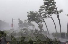 Bão Meranti gây thiệt hại lớn khi quét qua lãnh thổ Đài Loan