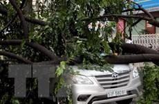 TP.HCM tiếp tục mưa lớn, nhiều cây xanh ngã đổ đè bẹp ôtô
