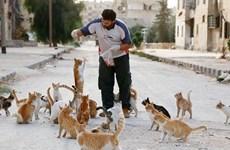 Những người bất chấp nguy hiểm cứu giúp chó mèo vùng chiến sự