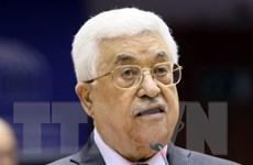 Tổng thống Abbas: Palestine vẫn chìa cánh tay hòa bình với Israel