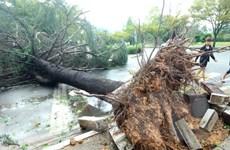 Bão Chaba hoành hành gây nhiều thiệt hại tại Hàn Quốc và Nhật Bản