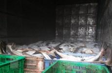 Công bố nguyên nhân khiến cá nuôi lồng bè ở Vũng Tàu chết
