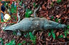 Bắt được cá sấu dài 2,8m từng nuốt chửng một người đàn ông