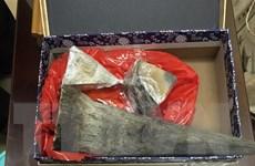Bắt giữ vụ vận chuyển 50kg sừng tê giác tại sân bay Nội Bài