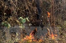 Cháy rừng keo ở Cẩm Phả, lửa bốc nhanh đe dọa nhiều ha rừng
