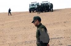 Algeria bắt giữ 2 nữ công dân Pháp có liên quan đến IS