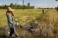 USAID đầu tư gần 160 triệu USD cho ngành nông nghiệp Campuchia