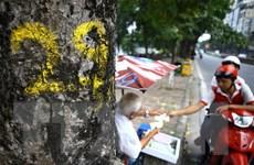 Làm rõ mục đích việc đẽo vỏ cây xà cừ trên đường phố Hà Nội