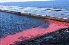 Nguyên nhân xuất hiện các vệt nước màu đỏ tại Chân Mây-Lăng Cô