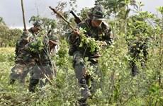 Hàng chục nghìn hộ gia đình Colombia tự nguyện bỏ cây coca