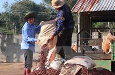 """Đắk Lắk bảo hộ nhãn hiệu """"Buon Ma Thuot Coffee"""" trên thế giới"""