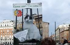 Độc đáo công viên Mèo thu hút du khách giữa thành Rome