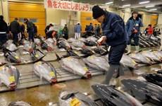 Nhật Bản lại phát hiện độc tố vượt ngưỡng tại khu chợ cá mới