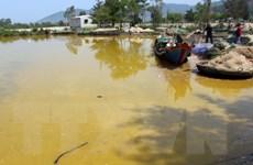 Công bố nguyên nhân hiện tượng nước biển màu vàng tại Lăng Cô