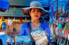 Ruồi xuất hiện dày đặc tại Công ty Kwong Lung-Meko sau vụ cháy lớn